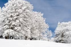 Schnee oberhalb von Freiburg