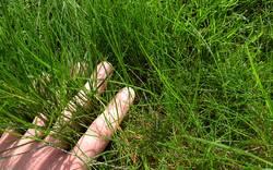 Hand im Grasraum