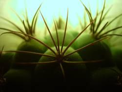 Kaktus im Gegenlicht