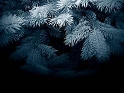 im dunklen, blauen tannenwald