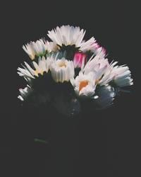 Gänseblümchenstrauß