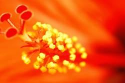 kleine Blüte so Groß