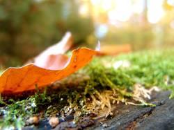 transparent autumn
