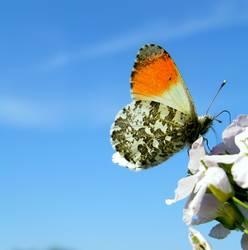 Schönes Ding, so`n Schmetterling