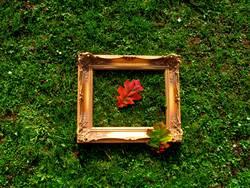 Herbstbild II
