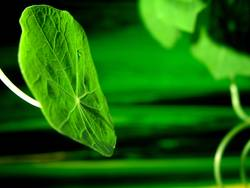 Grün mit Grün