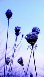 Frozen Violett