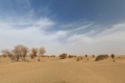 Desert poplars-tamarisks-Taklamakan Desert-Xinjiang-China-0328