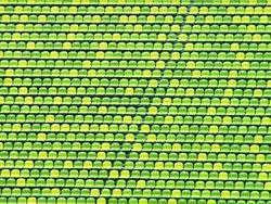 Die kleine grüne Welt