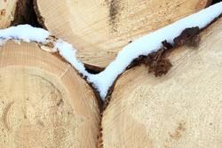 Frostiges Holz 2