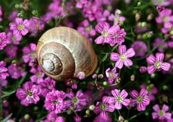 Schnecke im Blumenfeld.