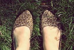 Leopardenfuß.
