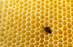 Steck doch den Kopf nicht in den Honig...