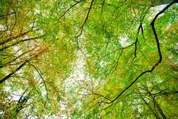 Herbst - Wald