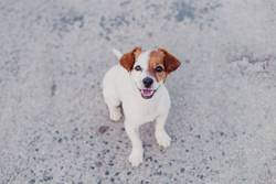 portrait outdoors of cute small dog looking into camera