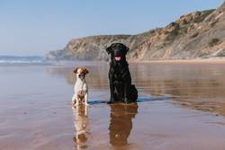 two happy dogs having fun at the beach. Sitting by sheashore