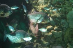 Aquarium Face