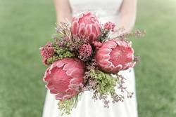 Bridal bouquet of proteas