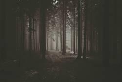 Nebel im Waldviertler Wald
