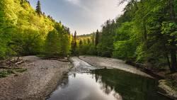 Naturlandschaft im Schwarzwald