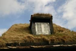 Gras auf dem Dach