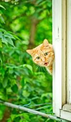 orange Katze weint auf dem Fenster