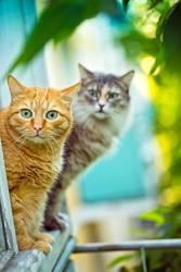 Rote und graue Katze, die auf dem Fensterbrett sitzt