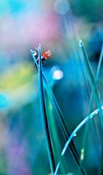 fly in the dewy grass bright sunny morning bokeh background
