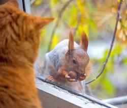 Katzen sehen ein Eichhörnchen