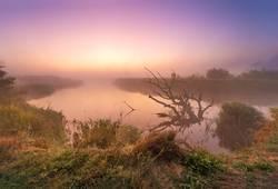 Old fallen dry oak laying in water towards sunrise