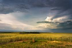 Storm dark clouds over field. Thunderstorm over a wheat field