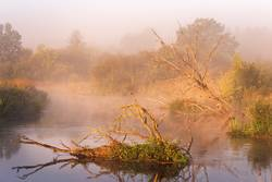 Old dry oaks laying in water. Autumn foggy rural sunrise