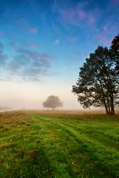 Autumn scene on a meadow with oak trees.