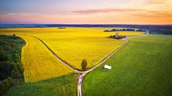 Old windmill in canola Flowering Field at spring sunrise