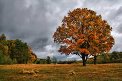 Orange autumn oaks on meadow. Golden Autumn Landscape