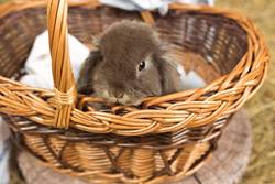 cute Bunny in a basket