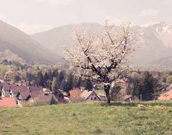 Frühling in Puchberg