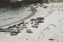 Seal Beach - La Jolla