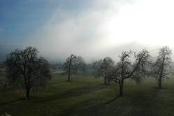 Bäume im Nebel mit langen Schatten