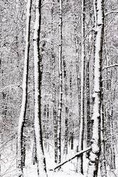 wertvoll | Schnee und Holz