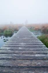 Nebel im Hohen Venn