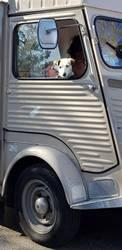 Hund im Autofenster