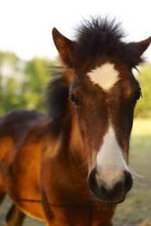 langes gesicht, kleines pferd