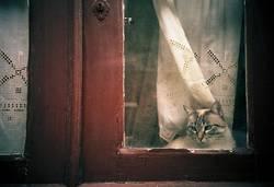 Cats & Windows...