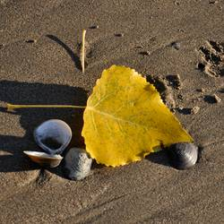 Herbst-auch am Strand!