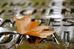 Herbstwort