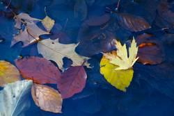 oberflächliche Herbstbetrachtung