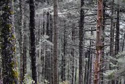 Vorbildlicher Wald