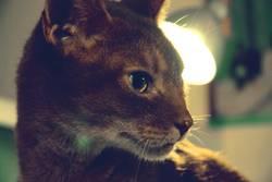 Schmidt's Katze