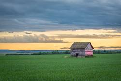 Vintage red barn in a wheat field at sunset in Canada